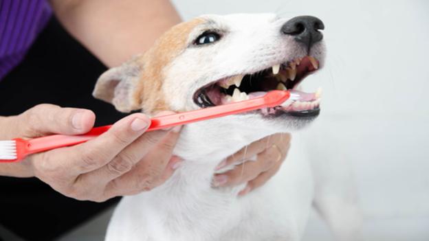 dog dental hygiene tips from medical veterinary service in midland texas